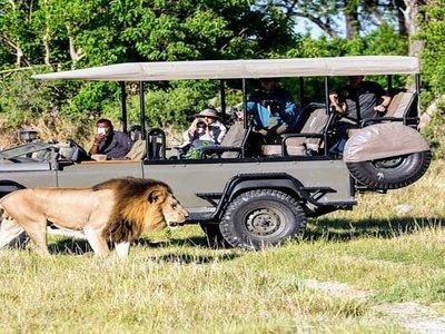 400 lion